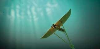 Record Electricity Generation in Faroe Islands Tidal Energy Project